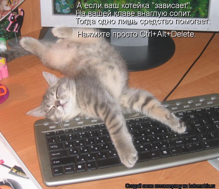 """Котоматрица: А если ваш котейка """"зависает"""", На вашей клаве внаглую сопит. Тогда одно лишь средство помогает: Нажмите просто Ctrl+Аlt+Delete."""