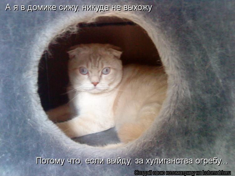 Котоматрица: А я в домике сижу, никуда не выхожу Потому что, если выйду, за хулиганства огребу...