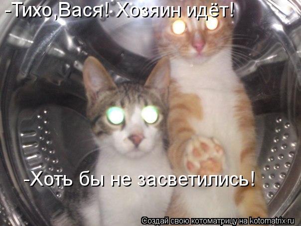 Котоматрица: -Тихо,Вася! Хозяин идёт! -Хоть бы не засветились!