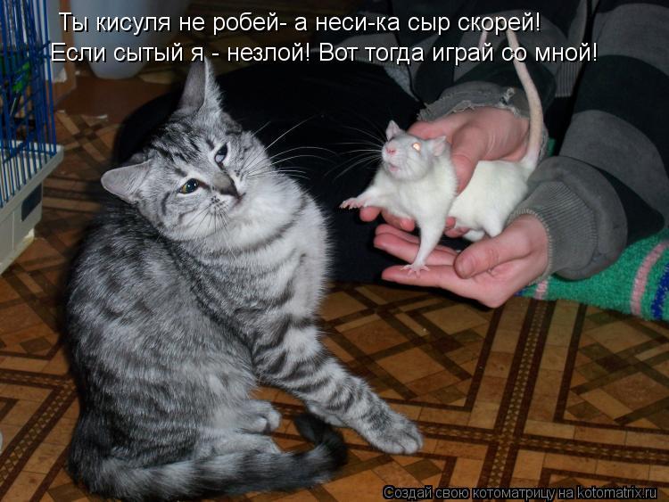 Котоматрица: Ты кисуля не робей- а неси-ка сыр скорей! Если сытый я - незлой! Вот тогда играй со мной!