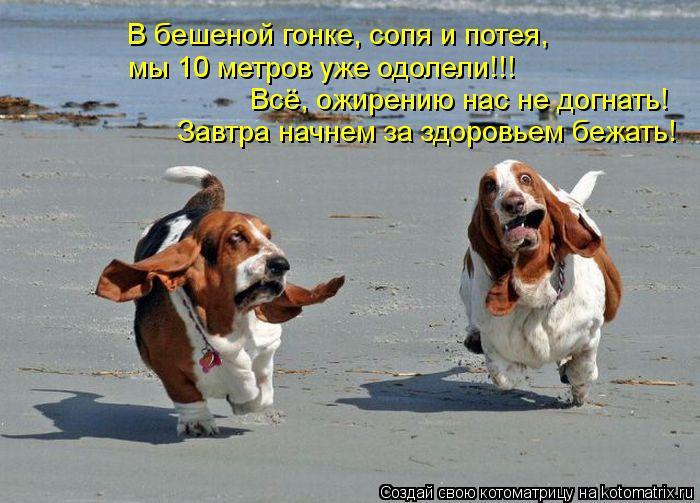 Котоматрица: В бешеной гонке, сопя и потея,  мы 10 метров уже одолели!!! Всё, ожирению нас не догнать! Завтра начнем за здоровьем бежать!