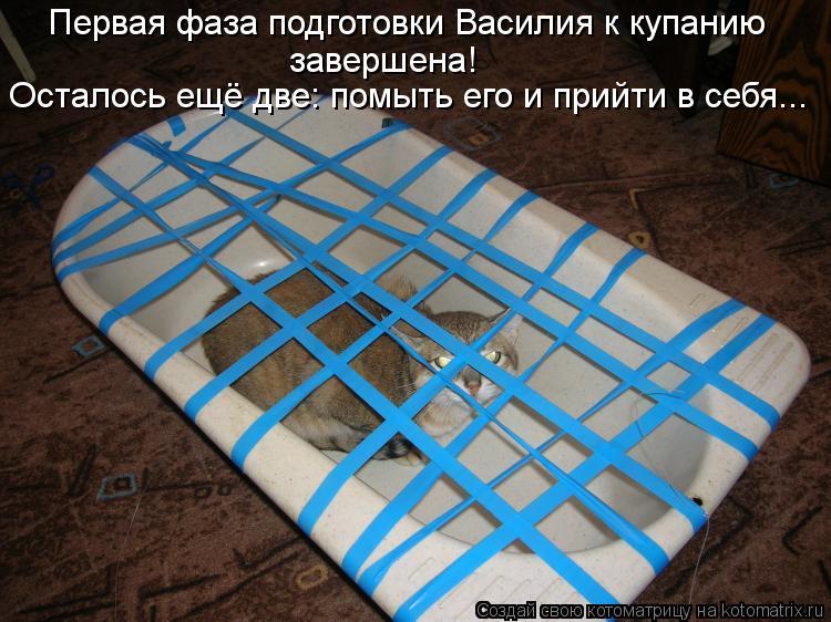 Котоматрица - Первая фаза подготовки Василия к купанию завершена! Осталось ещё две: