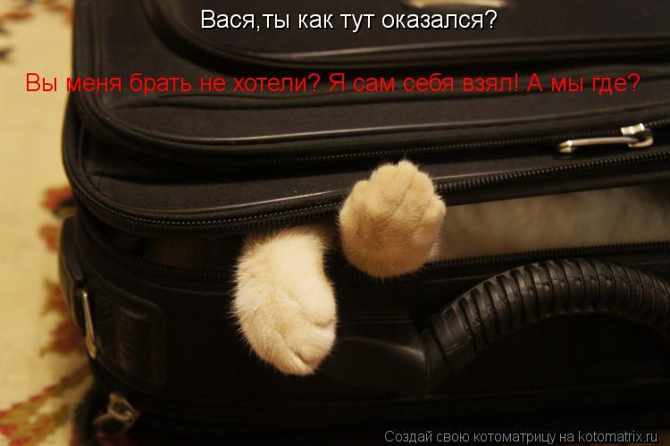 Котоматрица: Вася,ты как тут оказался? Вы меня брать не хотели? Я сам себя взял! А мы где?