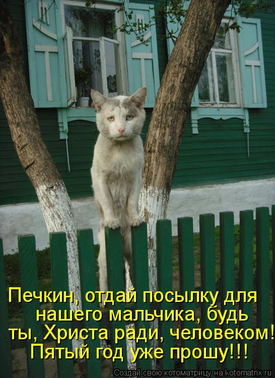 Котоматрица: Пятый год уже прошу!!!  ты, Христа ради, человеком! нашего мальчика, будь Печкин, отдай посылку для