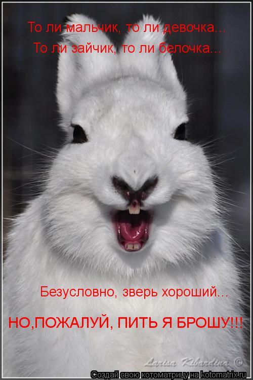 Котоматрица: То ли мальчик, то ли девочка... То ли зайчик, то ли белочка... Безусловно, зверь хороший... НО,ПОЖАЛУЙ, ПИТЬ Я БРОШУ!!!