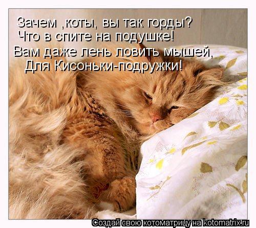 Котоматрица: Зачем ,коты, вы так горды? Зачем ,коты, вы так горды? Что в спите на подушке! Для Кисоньки-подружки! Вам даже лень ловить мышей,