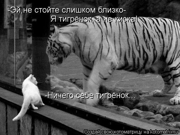 Котоматрица: -Эй,не стойте слишком близко- Я тигрёнок, а не киска! -Ничего себе тигрёнок...
