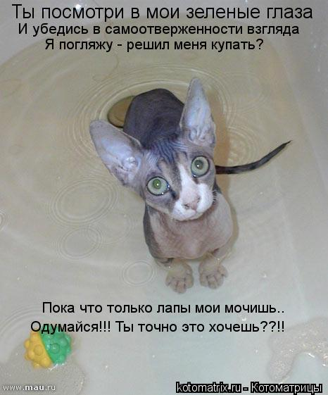 Котоматрица: Ты посмотри в мои зеленые глаза И убедись в самоотверженности взгляда Я погляжу - решил меня купать? Пока что только лапы мои мочишь.. Одумай