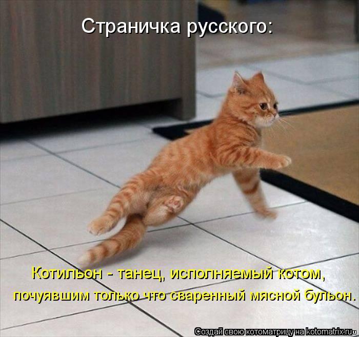 Котоматрица: Страничка русского: Котильон - танец, исполняемый котом, почуявшим только что сваренный мясной бульон.