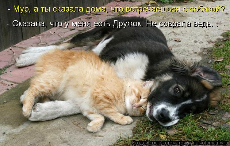 Котоматрица: - Мур, а ты сказала дома, что встречаешься с собакой? - Сказала, что у меня есть Дружок. Не соврала ведь...