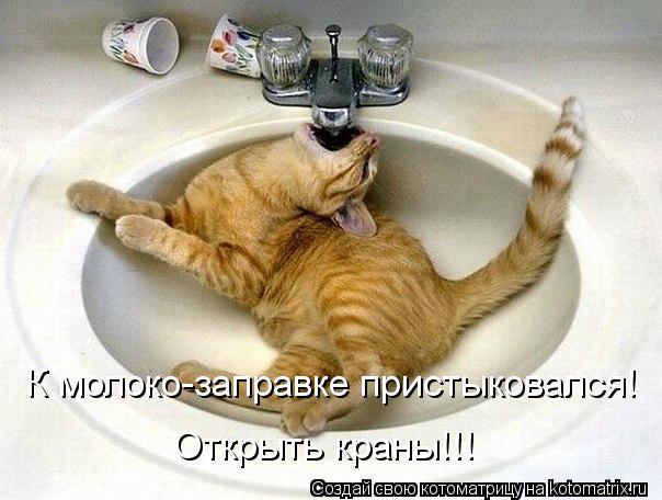 Котоматрица: К молоко-заправке пристыковался! Открыть краны!!!