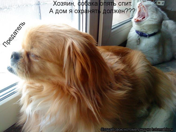 Котоматрица: Хозяин, собака опять спит. А дом я охранять должен??? Предатель