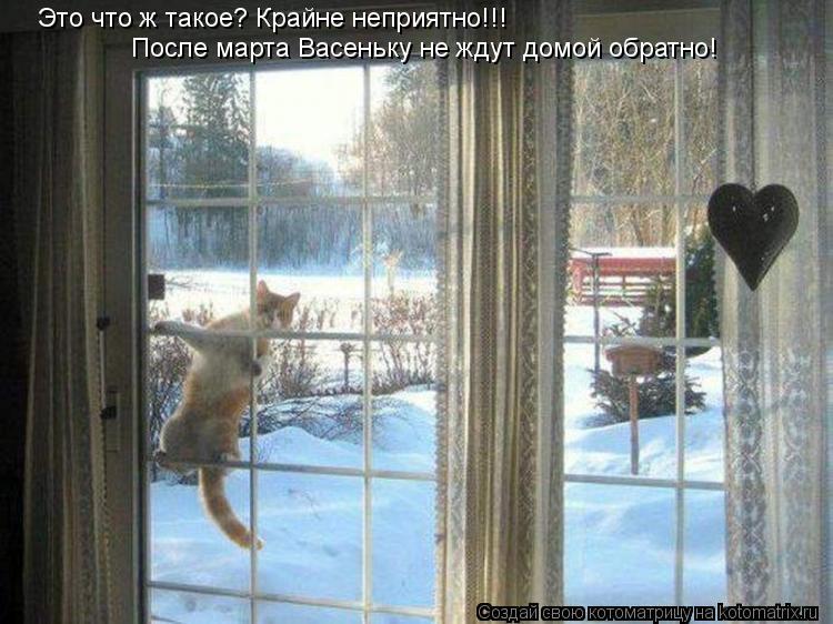 Котоматрица: Это что ж такое? Крайне неприятно!!! После марта Васеньку не ждут домой обратно!