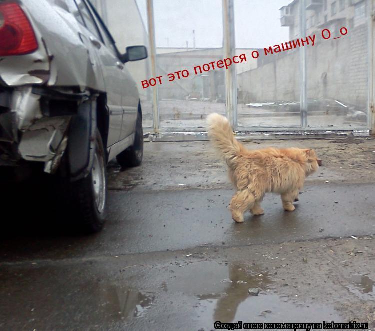 Котоматрица: вот это потерся о машину О_о