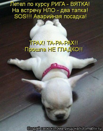Котоматрица: Летел по курсу РИГА - ВЯТКА! На встречу НЛО - два тапка! SOS!!! Аварийная посадка! ТРАХ! ТА-РА-РАХ!! Прошла НЕ ГЛАДКО!!