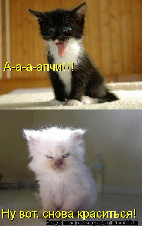 Котоматрица: А-а-а-апчи!!! Ну вот, снова краситься!