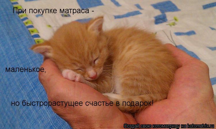 Котоматрица: При покупке матраса -  маленькое, но быстрорастущее счастье в подарок!