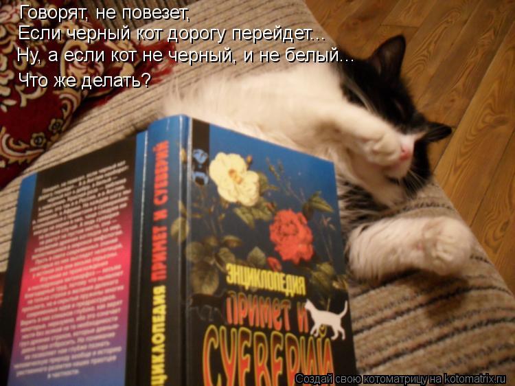 Котоматрица: Говорят, не повезет, Если черный кот дорогу перейдет... Ну, а если кот не черный, и не белый... Что же делать?