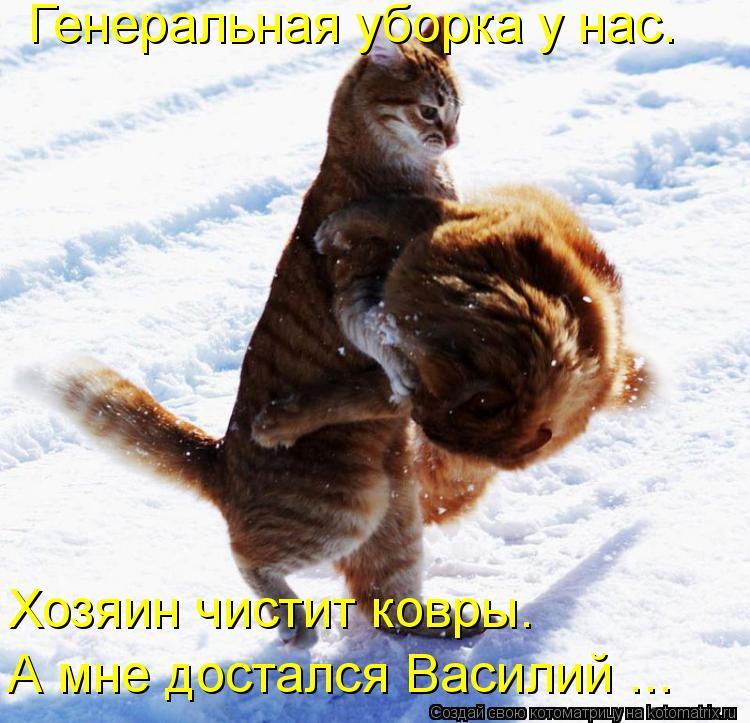 Котоматрица: Генеральная уборка у нас. Хозяин чистит ковры. А мне достался Василий ...