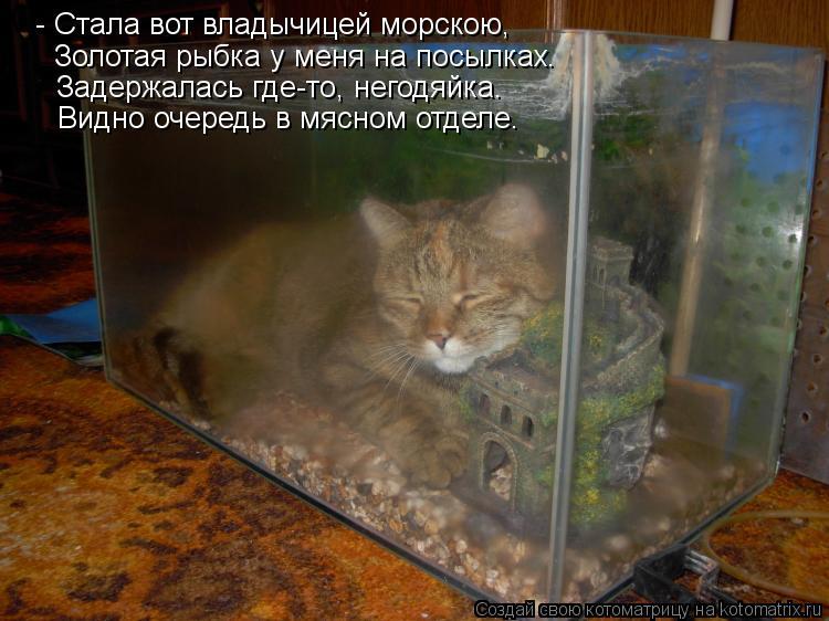 Котоматрица: - Стала вот владычицей морскою, Золотая рыбка у меня на посылках. Задержалась где-то, негодяйка. Видно очередь в мясном отделе.