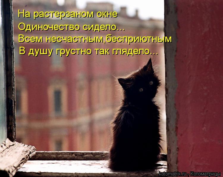 Котоматрица: На растерзаном окне Одиночество сидело... Всем несчастным,бесприютным В душу грустно так глядело...
