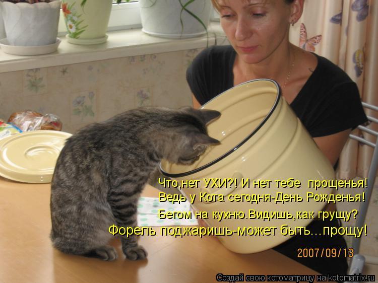Котоматрица: Форель поджаришь-может быть...прощу! Ведь у Кота сегодня-День Рожденья! Бегом на кухню.Видишь,как грущу? Что,нет УХИ?! И нет тебе  прощенья!
