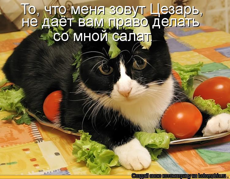 Котоматрица: То, что меня зовут Цезарь, не даёт вам право делать со мной салат.