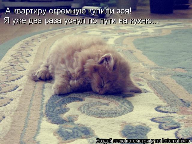 Котоматрица: А квартиру огромную купили зря! Я уже два раза уснул по пути на кухню...
