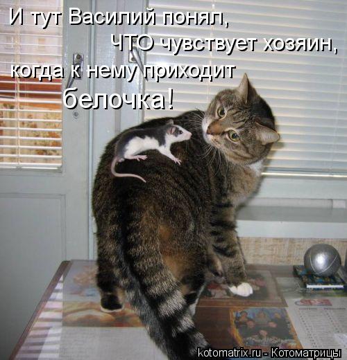 Котоматрица: И тут Василий понял, ЧТО чувствует хозяин, когда к нему приходит белочка!