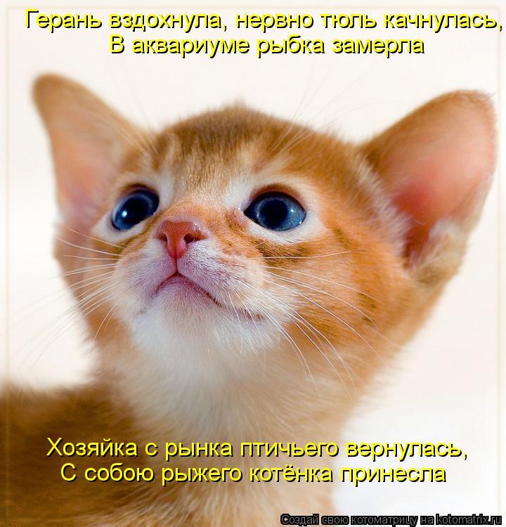 Котоматрица: Хозяйка с рынка птичьего вернулась, С собою рыжего котёнка принесла В аквариуме рыбка замерла Герань вздохнула, нервно тюль качнулась,