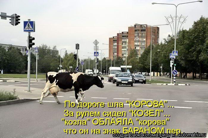 "Котоматрица: По дороге шла ""КОРОВА""... За рулем сидел ""КОЗЕЛ""... ""козла"" ОБЛАЯЛА ""корова"" что он на знак БАРАНОМ пер."