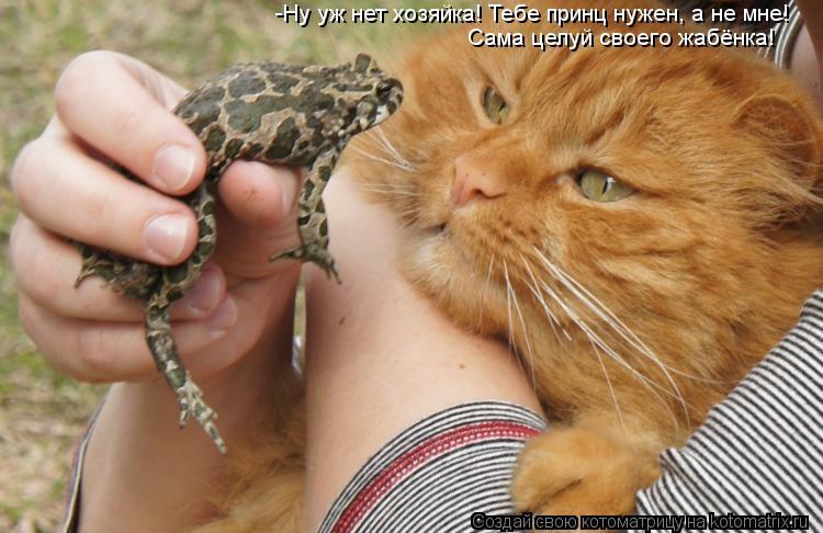 Котоматрица - -Ну уж нет хозяйка! Тебе принц нужен, а не мне! Сама целуй своего жабё