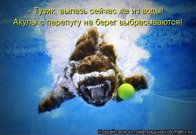 Котоматрица: - Тузик, вылазь сейчас же из воды! Акулы с перепугу на берег выбрасываются!