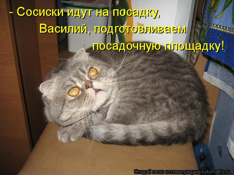 Котоматрица: - Сосиски идут на посадку, Василий, подготовливаем посадочную площадку!