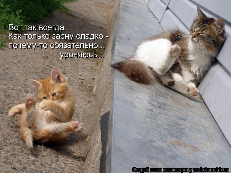 Котоматрица: - Вот так всегда... Как только засну сладко -  почему-то обязательно...  уроняюсь...