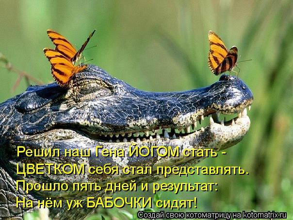 http://kotomatrix.ru/images/lolz/2012/04/10/1161597.jpg