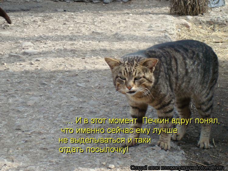Котоматрица: ... И в этот момент  Печкин вдруг понял, что именно сейчас ему лучше  не выделываться и таки отдать посылочку!