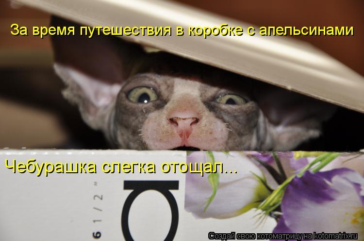 Котоматрица: За время путешествия в коробке с апельсинами Чебурашка слегка отощал...