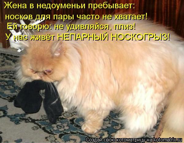 Котоматрица: Жена в недоуменьи пребывает:  носков для пары часто не хватает! Ей говорю: не удивляйся, плиз! У нас живёт НЕПАРНЫЙ НОСКОГРЫЗ!