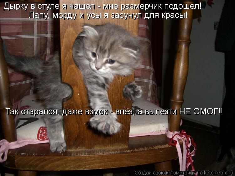 Котоматрица - Дырку в стуле я нашел - мне размерчик подошел! Лапу, морду и усы я зас