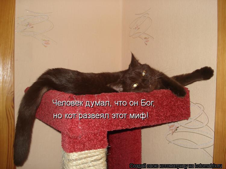 Котоматрица: Человек думал, что он Бог,  но кот развеял этот миф!