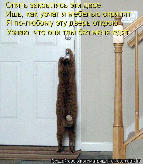 Котоматрица: Ишь, как урчат и мебелью скрипят. Опять закрылись эти двое. Я по-любому эту дверь открою, Узнаю, что они там без меня едят.