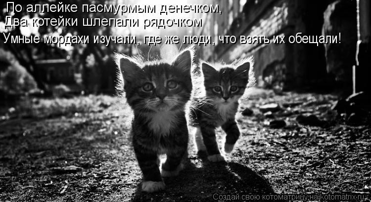 Котоматрица: По аллейке пасмурмым денечком, Умные мордахи изучали, где же люди, что взять их обещали! Два котейки шлепали рядочком