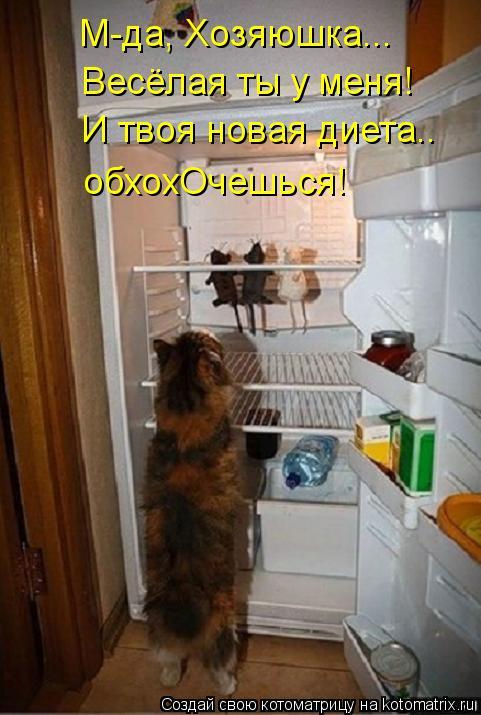 Котоматрица: М-да, Хозяюшка... Весёлая ты у меня! И твоя новая диета.. обхохОчешься!