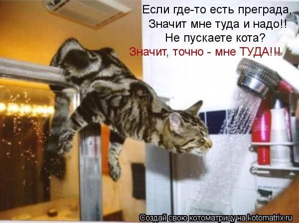 Котоматрица - Если где-то есть преграда, Значит мне туда и надо!! Не пускаете кота?