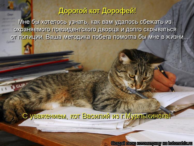 Котоматрица: Мне бы хотелось узнать, как вам удалось сбежать из Дорогой кот Дорофей! охраняемого президентского дворца и долго скрываться от полиции. Ва