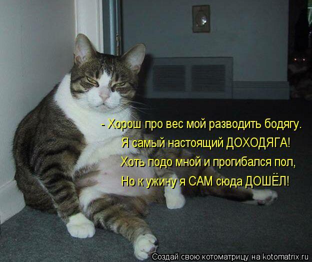 Котоматрица: - Хорош про вес мой разводить бодягу. Я самый настоящий ДОХОДЯГА! Хоть подо мной и прогибался пол, Но к ужину я САМ сюда ДОШЕЛ! ..