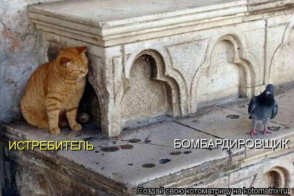 Котоматрица - БОМБАРДИРОВЩИК ИСТРЕБИТЕЛЬ