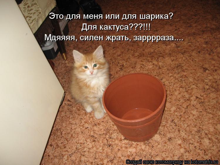 Котоматрица - Это для меня или для шарика? Для кактуса???!!! Мдяяяя, силен жрать, за