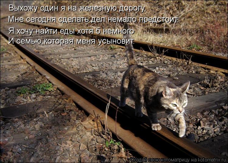 Котоматрица: Выхожу один я на железную дорогу, Мне сегодня сделать дел немало предстоит. Я хочу найти еды хотя б немного И семью,которая меня усыновит.